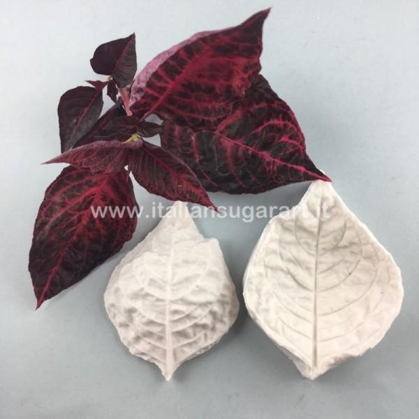 Iresine Leaf