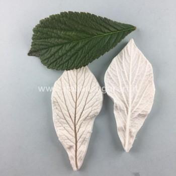 Rodgersia Leaft