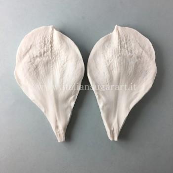 marcatore petalo amaryllis