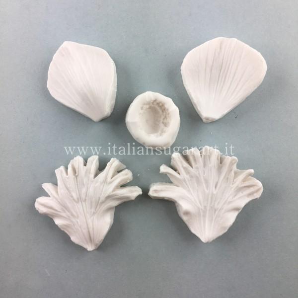 veiner flower anemone