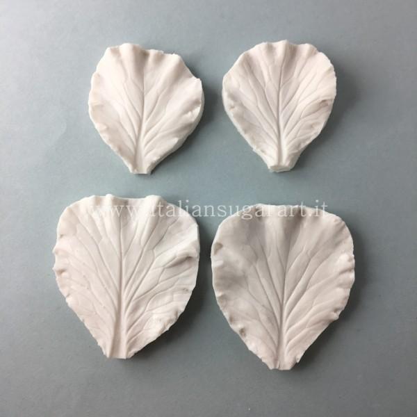 impronta ornamentale fiore cavolo