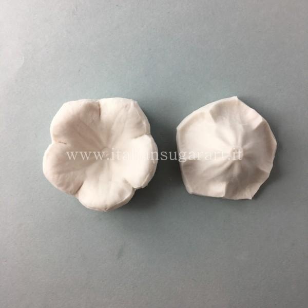 veiner bellflower petunia