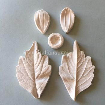 veiner flower dahlia