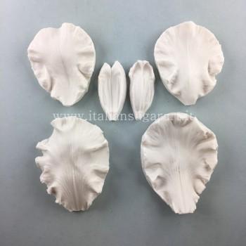 veiners of the Bearded iris or even Iris Barbata