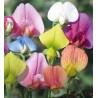 coppia di venatori silicone fiore Pisello Odoroso
