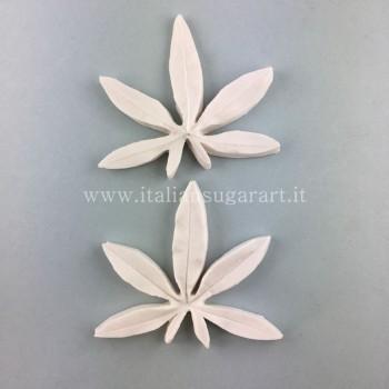 venatore foglia passiflora