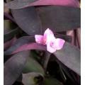 stampo in silicone per fiori di zucchero