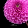 attrezzatura per fiori set completo per dalia