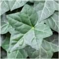 Utensili in silicone modelling di  foglie di edera