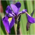 sito online isa veiners  doppia impressione fiori