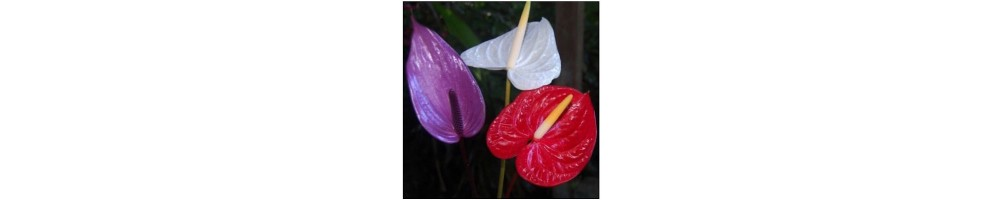 Decorations and tools for cake design veiners flower anthurium