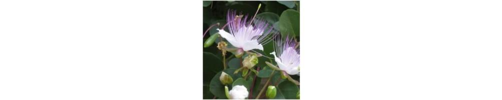 Acquista il venatore per petali acquistabile sul nostro shop online
