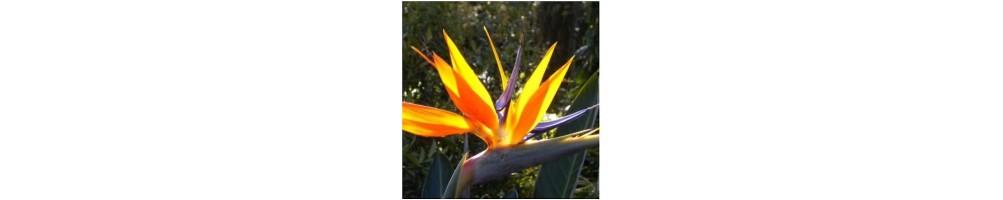 Venatore in silicone per petali uccello del paradiso per sugar paste