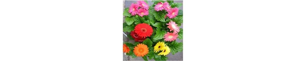 Vendita online il Venatore per fiori e foglie di gerbera 3d, in un cli