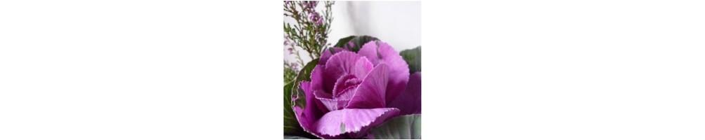 Acquista online i nostri stampi per fiore e foglie di Brassica